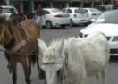 Pogledajte kako se nezadovoljni kupac Škode Octavie osvetio prodavcu (VIDEO)