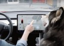 Tesla predstavio 'pseći mod' koji kućne ljubimice u vozilu štiti od toplotnog udara